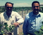 Grower Bio: The Dhaliwal Family