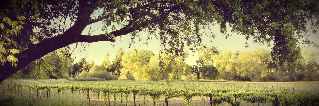 Vines_Trees