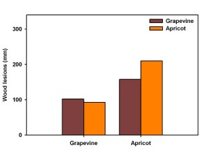 Figure 5. Average length of wood lesions measured in grapevine and apricot plants, which were inoculated with Eutypa strains originating from grapevine (brown) or apricot (orange). Wood symptoms were measured 14 months after inoculation in the greenhouse. Results suggest no host specificity, with all strains able to cause similar levels of wood symptoms in each host. That said, apricot is more susceptible to wood degradation than grapevine.