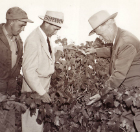 San Joaquin County UCCE Farm Advisors Through the Years