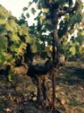 Vineyard Management Self-Evaluation