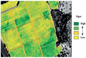 Figure 6.10: Nematode infestation. This NDVI image shows areas of depressed vine growth as yellow to brownish areas across the center of the image in all three main blocks. Photo: J. Hutton, Grayhawk Imaging.