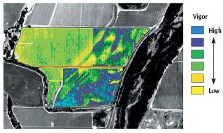 Figure 6.3: NDVI image of a vineyard adjacent to a river. The streaky appearance shows the effect of deposition of alluvium with a relatively high water-holding capacity. Photo: J. Hutton, Grayhawk Imaging.