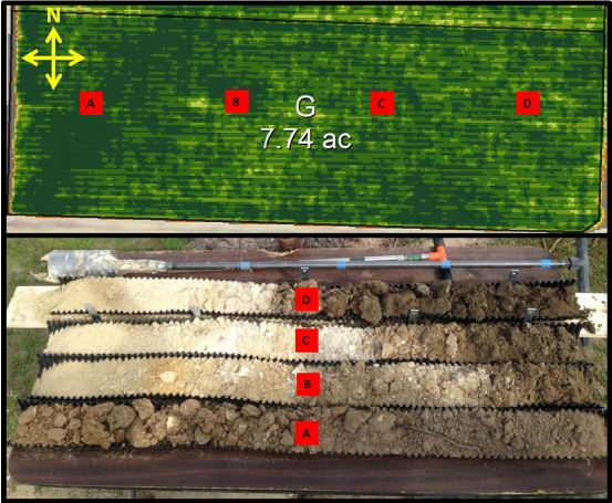 Figure 3: A 7.74 acre block of Cabernet Sauvignon is planned as a single unit for irrigation. Soil cores extracted to a depth of 4 feet from west to east (A,B,C,D) reveal differences in depth of soil horizons across the block.