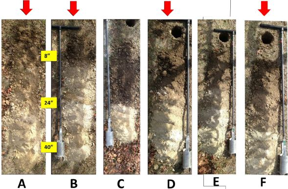 Figure 5: Disturbed soil cores excavated with a hand auger are laid out on the vineyard floor for visual evaluation. The red arrows indicate profiles that are visually more representative of the block.