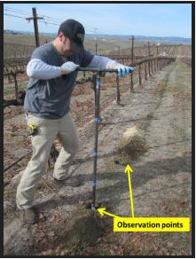 Figure 7: Before installing soil moisture sensors under the drip line, a series of observation points can be evaluated at a short distance from the desired sensor placement location. This extra step can verify abnormalities in soil that influence water movement, such as hard pans, or pockets of rock or sand.