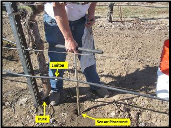 Figure 9: A typical soil moisture sensor installation showing the placement distance about 18 inches from the vine trunk, and 4-6 inches from a drip emitter.