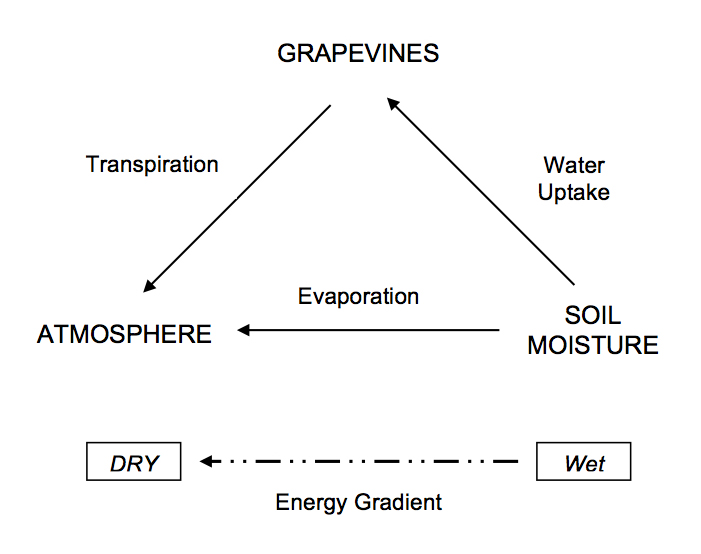 Figure 2:  The vineyard moisture continuum. Image: Progressive Viticulture©