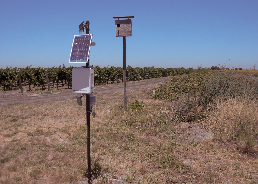 An automated weather station adjacent to a vineyard