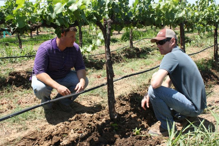 We found experiential and social learning to be highly useful pathways for grower learning. Pictured here are Lodi winegrape growers engaging in both experiential and social learning simultaneously. They are sharing thoughts after observing a trial pass of a prototype multi-row in-row cultivator. We found field research and trials conducted in growers own fields and in others' fields (experiential) and interpersonal relationships with other growers (social) were ranked as highly useful sources for learning about vineyard management. Different pathways can work synergistically, and in this case experiential and social learning complemented each other.