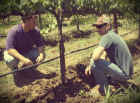 How Do Growers Sharpen Their Knowledge About Vineyard Management?