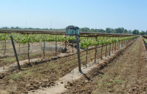 Figure 1::Early season tillage conserves soil moisture.  (Photo source:  Progressive Viticulture©)