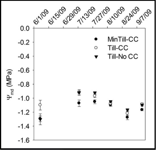 Figure 4: Mid-day vine water potentials (MPa) from 101-14 Mgt vines. Significant differences were seen in summer 2009 but none in 2010. Samples were taken between 1 and 3 pm on 16 vines per treatment, and significance was declared using standard errors of the mean.