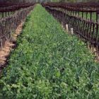 Comprehensive Vineyard Water Management