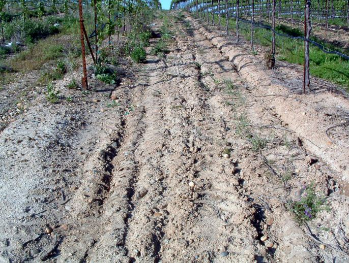 Fig. 1.  Erosion of a sloped vineyard soil with minimum cover crop protection. Source: Progressive Viticulture, LLC ©