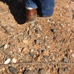 NRCS SOIL SURVEY INFORMATION IMPORTANT TO VINEYARDS