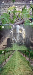 Fig 2. Example prioritization: restricted shoot growth versus fungicide spraying versus cover crop mowing.