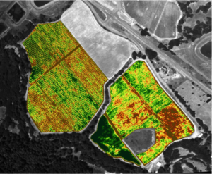 Photo 2. NDVI Afternoon.