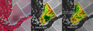 Photo 3. NDVI Soil Variations.