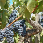 VINEYARD BUSINESS IDENTITY AND MARKETING