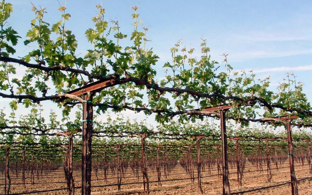 VINEYARD DESIGN & MANAGEMENT FOR MAXIMUM EFFICIENCY