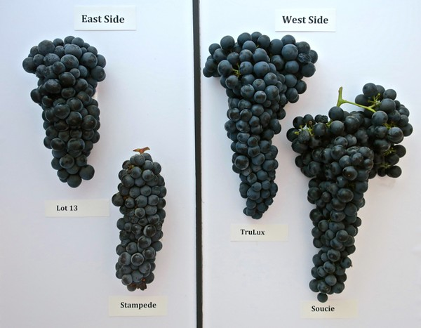 THE PHYSICAL IMPACT OF SOIL AND SELECTION ON LODI ZINFANDELS
