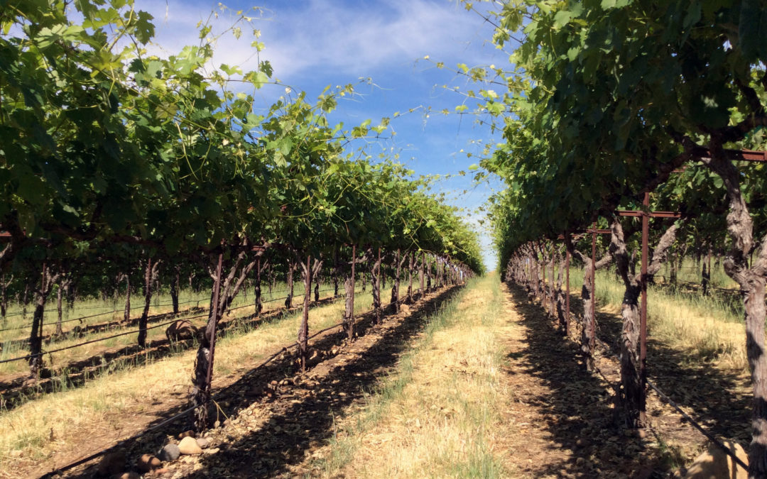 WINEGRAPE BUSINESS PLANNING FOR THE FUTURE