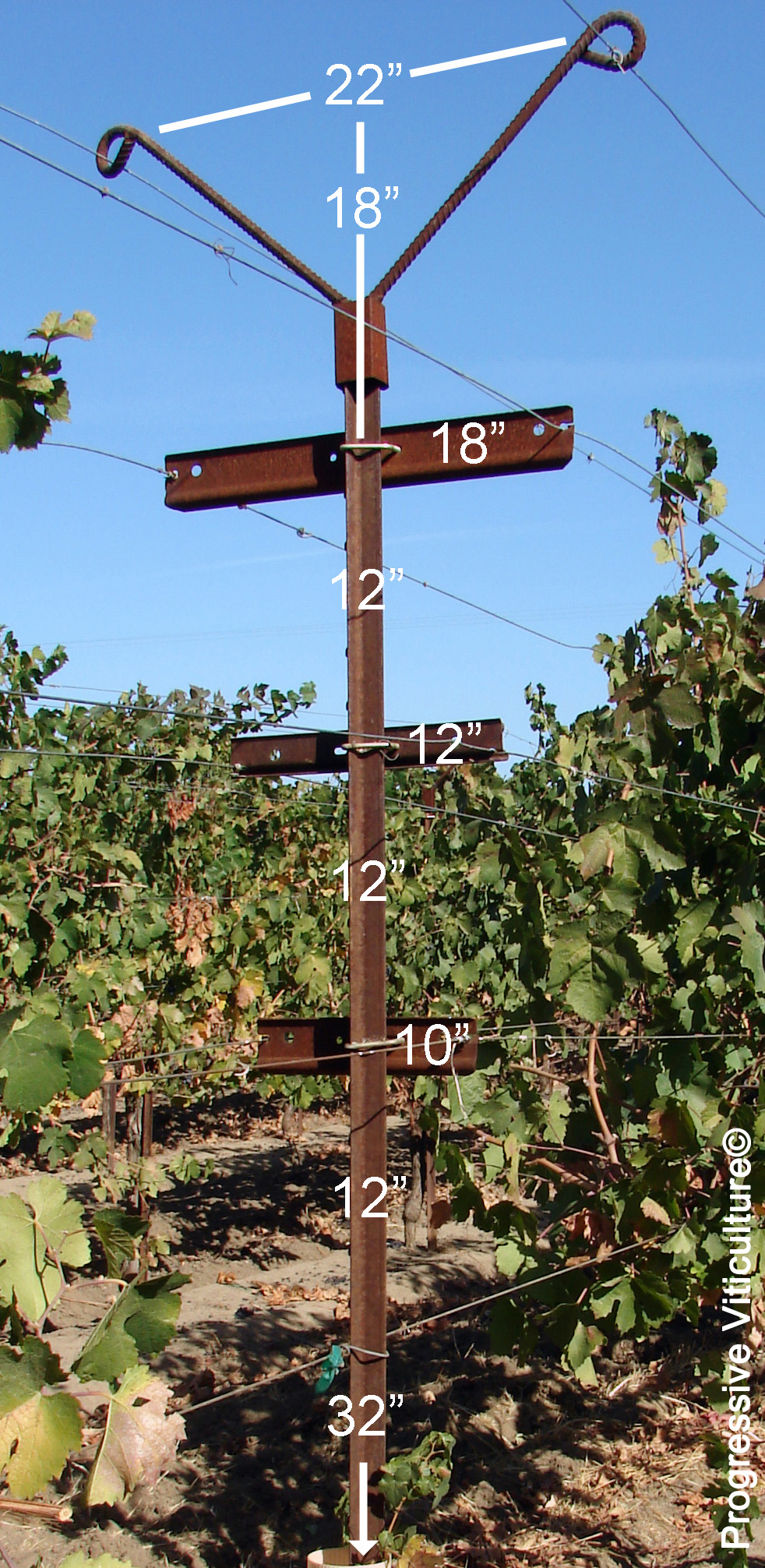 Vertical Shoot Positioned Trellis Systems In Warm Regions