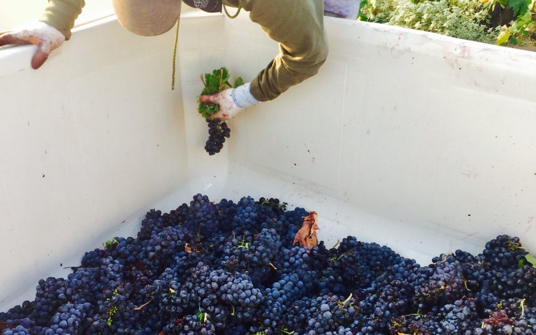 2018 GRAPE CRUSH REPORT