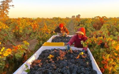 A LISTING OF LODI GROWN WINES PRODUCED BY NON-LODI WINERIES.