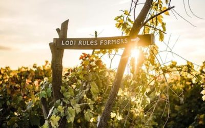 WHY LODI RULES IS MORE IMPORTANT THAN EVER TO HEALTH CONSCIOUS AND WOKE CONSUMERS.