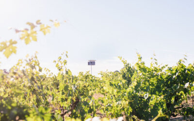 RISK MANAGEMENT FOR VINEYARD BUSINESSES