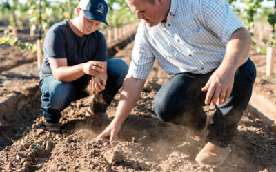 SOIL TEXTURE AND VINEYARD MANAGEMENT