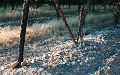 AN ECONOMIC ANALYSIS OF PREVENTATIVE PRACTICES FOR MANAGING TRUNK DISEASE IN TABLE GRAPE VINEYARDS