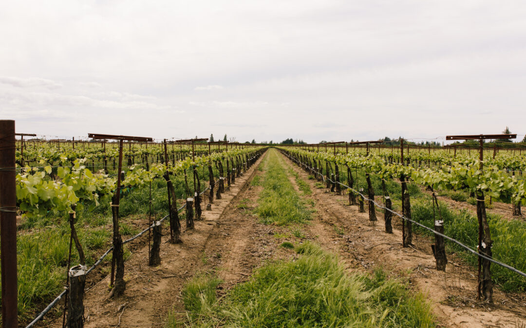 SYSTEMATIC VINEYARD MONITORING FOR EFFECTIVE VINEYARD MANAGEMENT