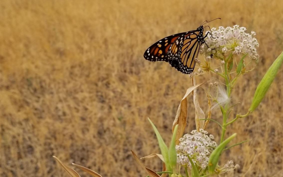 XERCES MONARCH & POLLINATOR KITS: CALIFORNIA