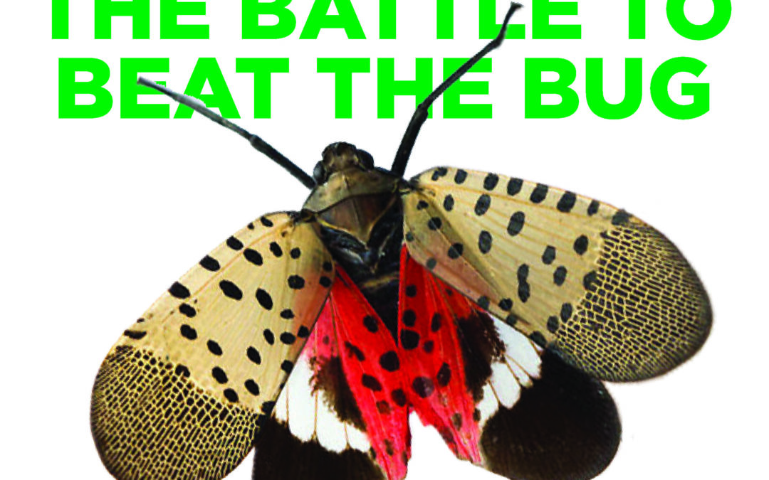 CALIFORNIA ESTABLISHES QUARANTINE TO PROHIBIT INTRODUCTION OF SPOTTED LANTERNFLY INTO CALIFORNIA