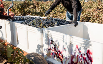 DUE DILIGENCE IN VINEYARD PURCHASES